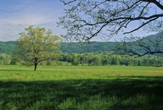 Spring, Trees, Fields. Spring Landscape, Cades Cove, Great Smoky Mtns NP, TN stock photos