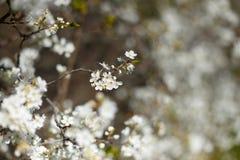 Spring, trees flowers stock photos