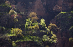 Spring trees in Gansu China Royalty Free Stock Photography