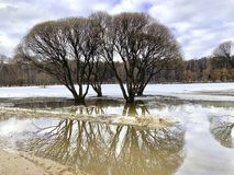 Spring Trees without leaves, reflected in the water. stock image