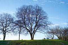 Spring trees over the blue sky on the background with green grass. People sit on the bench on the background of blue sky and green grass near to BMW Welt Stock Photography