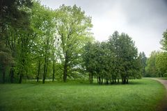 Spring trees in the park. In cloudy weather stock photos