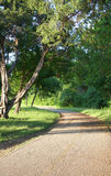 Spring trees and path in the afternoon. Trees and path in spring afternoon Royalty Free Stock Photo