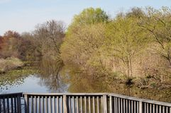 Spring trees reflecting in water. Spring landscape from the wooden balcony Stock Photos
