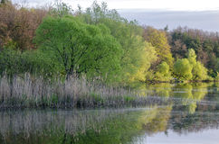 Spring trees on the riverside Royalty Free Stock Photography