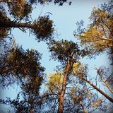 Spring trees and sky royalty free stock image