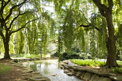 Spring Trees and Stream. Sunlight, stream and trees in Northeastern USA forest Royalty Free Stock Photography