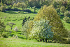 Spring trees in the Taunus mountains Royalty Free Stock Photo