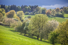 Spring trees in the Taunus mountains Royalty Free Stock Images