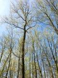 Spring Treetops Stock Photos