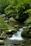 Spring in Tremont at Great Smoky Mountains National Park, TN USA. Cascades in the middle prong of the Little Pigeon River in Tremont of Great Smoky Mountains Stock Image