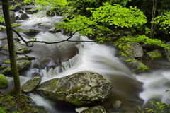 Spring in Tremont at Great Smoky Mountains National Park, TN USA. Cascades in the middle prong of the Little Pigeon River in Tremont of Great Smoky Mountains Royalty Free Stock Image