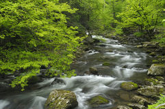 Spring in Tremont at Great Smoky Mountains National Park, TN USA. Cascades in the middle prong of the Little Pigeon River in Tremont of Great Smoky Mountains Royalty Free Stock Images