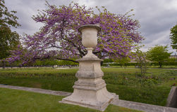 Spring in Tuileries Garden Royalty Free Stock Image