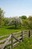Spring tuin op Royalty-vrije Stock Fotografie