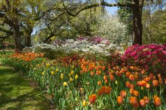Spring tulip bed in Southern Garden Royalty Free Stock Photos