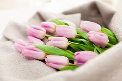 Spring tulip bouquet on wool Royalty Free Stock Image