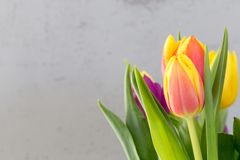 Spring tulip easter background with empty copy space Stock Images