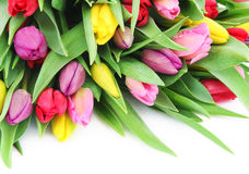 Spring tulip flowers Stock Photo
