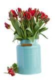 Spring tulip flowers in blue Stock Photos