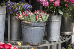 A spring tulip flowers in bucket near shop Royalty Free Stock Photos