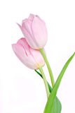 Spring Tulip Flowers bunch Stock Images