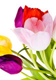 Spring Tulip Flowers bunch Royalty Free Stock Photography