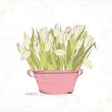 Spring tulip flowers Royalty Free Stock Image