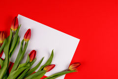 Spring tulip flowers and paper card on red background. Stock Photos