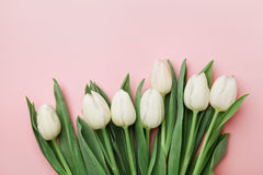 Spring tulip flowers on pink background top view in flat lay style. Greeting for Womens or Mothers Day. Spring tulip flowers on pink background top view in flat royalty free stock image