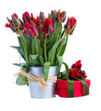 Spring tulip flowers in pot with present Stock Photos