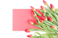 Spring tulip flowers and red paper card on white background. Stock Images