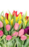 Spring tulip flowers Red pink yellow Stock Images