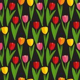 Spring Tulip Flowers Seamless Pattern Background Vector Illustration Royalty Free Stock Photography