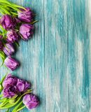 Spring tulip flowers. On a green wooden table Royalty Free Stock Image
