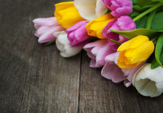 Spring tulip flowers Royalty Free Stock Photography