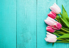 Spring tulip flowers Stock Photography