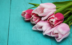 Spring tulip flowers Royalty Free Stock Photo