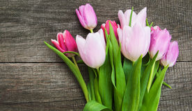 Spring tulip flowers Stock Images