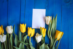 Spring tulip flowersand paper card on blue wooden table from above in flat lay style. Royalty Free Stock Photos