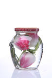 Spring tulip in a glass vase. Spring beautiful tulip in a glass vase isolated on white royalty free stock image
