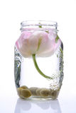 Spring tulip in a glass vase. Spring beautiful tulip in a glass vase isolated on white stock photos