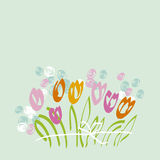 Spring tulip on pale mint background. Stock Images