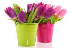 Spring tulips Stock Photo