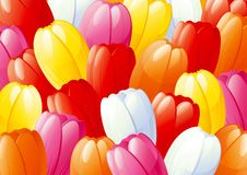 Spring tulips. Horizontal vector spring background with  many red, yellow, pink, orange and white tulips Royalty Free Stock Image