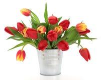 Spring Tulips Royalty Free Stock Photo