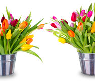 Spring tulips Stock Photo