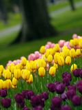 Spring tulips. Beautiful park in spring, tulips in foreground royalty free stock photography