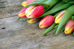 Bunch of tulip flowers Stock Photography