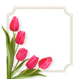 Spring tulips and border Stock Photo